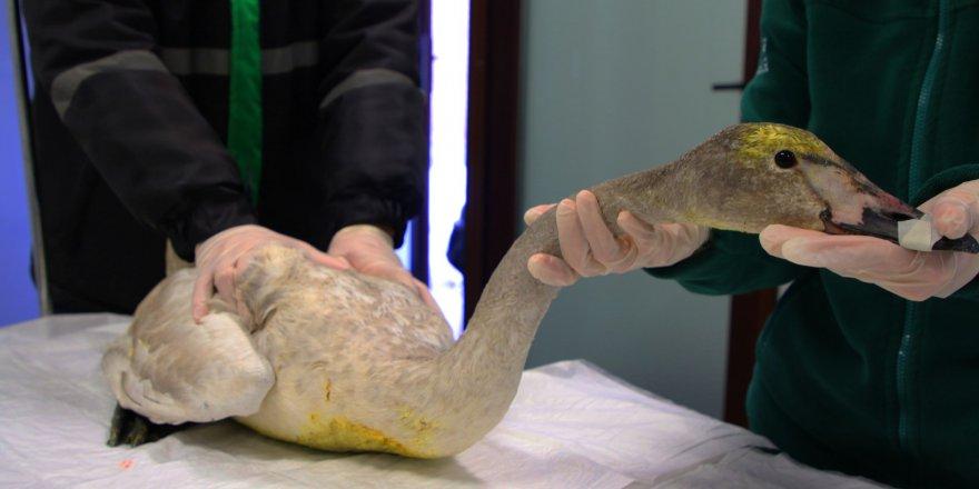 sacma-ile-yaralanan-kugu-ormanyada-(2).jpeg