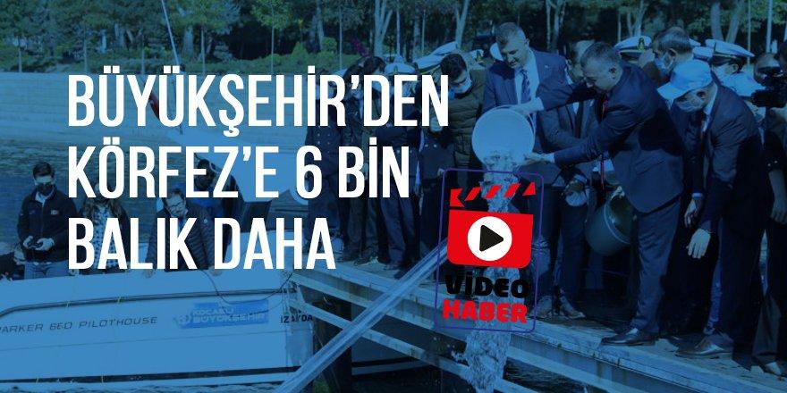 Büyükşehir'den Körfez'e 6 bin balık daha